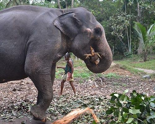 elephant expenses