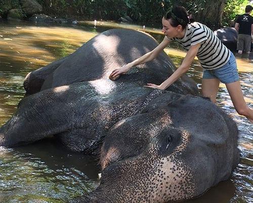 Elephant baths