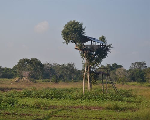 elephants conservation tree house