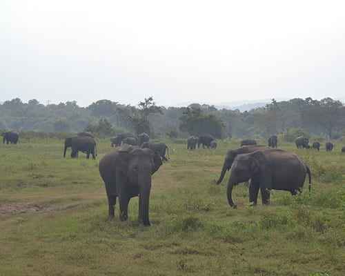elephant conservation wild elephants